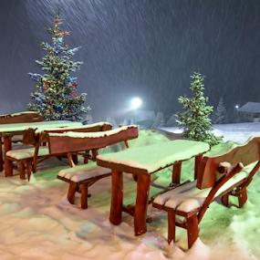 All Christmas trees are perfect! by Adrian Urbanek - Public Holidays Christmas ( snow, christmas, night, celebration )