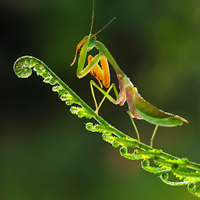 by Suhaimi Azzura - Animals Insects & Spiders