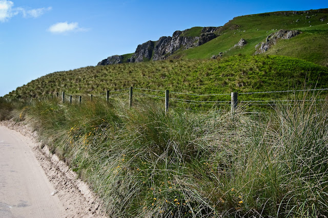 I just love the grass in the sand dunes.