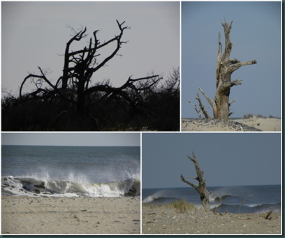 beach tree collage