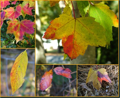 leaf colors collage