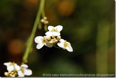 2571 Cascajales-Valsequillo(Colderrisco G.C.)