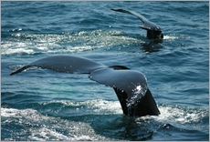 Whale LR - Fotolia_3402922_Subscription_XL