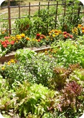 Raised_bed_garden_sm