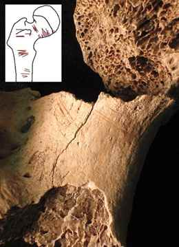 Bone fragments recovered from Sacred Ridge (including this hip bone) show signs of tool marks, suggesting bodies were mutilated.