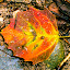 Fall by Dale Versteegen - Nature Up Close Leaves & Grasses ( color, fall, leaf, droplets,  )