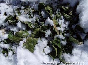 spinach (640x477)
