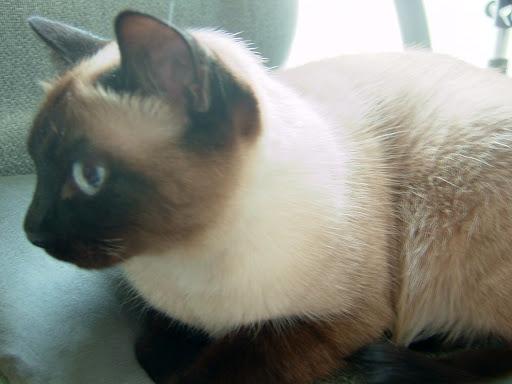 우리집 고양이 잔디 [고양이,고양이키우기,고양이집사,반려묘,cat]