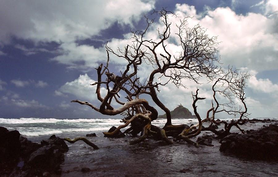 Hana Tree by Michael Moss - Landscapes Beaches ( road to hana, water, clouds, hana, tree, waves, beach, hawaii )