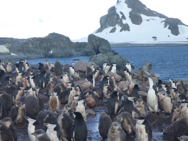 Imagini Antarctica: pinguini.JPG