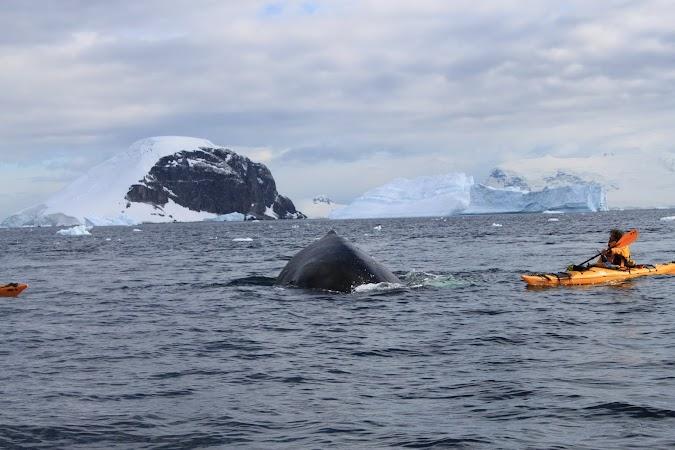 21. balena.JPG