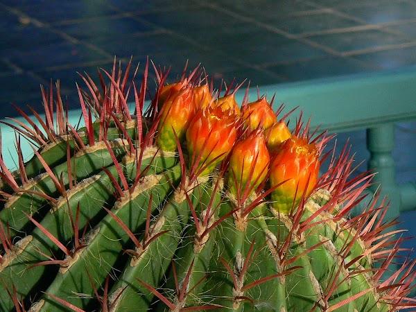 Obiective turistice Maroc: cactusi, Marrakech
