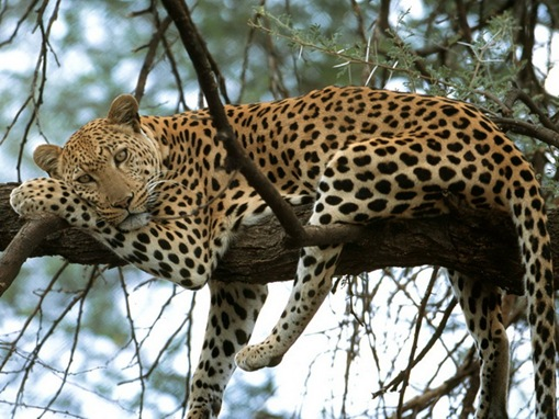 Protecting big cats is the call of next year's World ...  |Big Cat Species