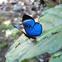 Sky-blue Eyemark