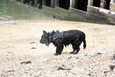 Dog on the beach in Whitstable Kent