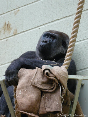 London zoo (Regent's Park) ; un moment de détente agréable à Londres 2