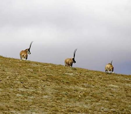 【纽约时报】地球将迎来第六次大规模物种灭绝?