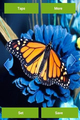 Butterflies Wallpapers