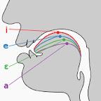 положении гортани и языка