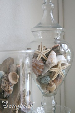 Vases with shells