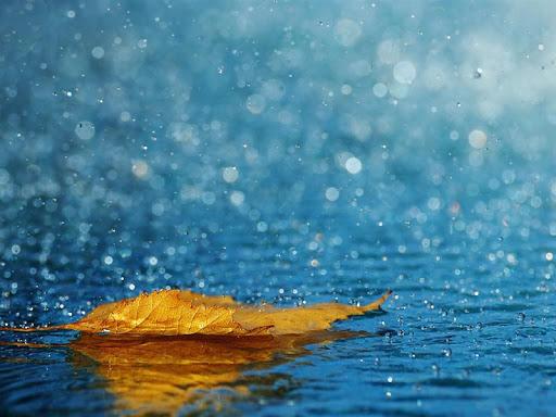Heavy Rain Live Wallpaper