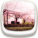 Cherry Blossom★ Wallpaper 02 icon