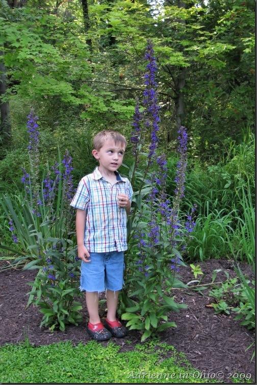 giant lobelia photo by Adrienne in Ohio