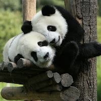 Pandas1.jpg