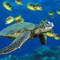 Tortuga marina.bmp