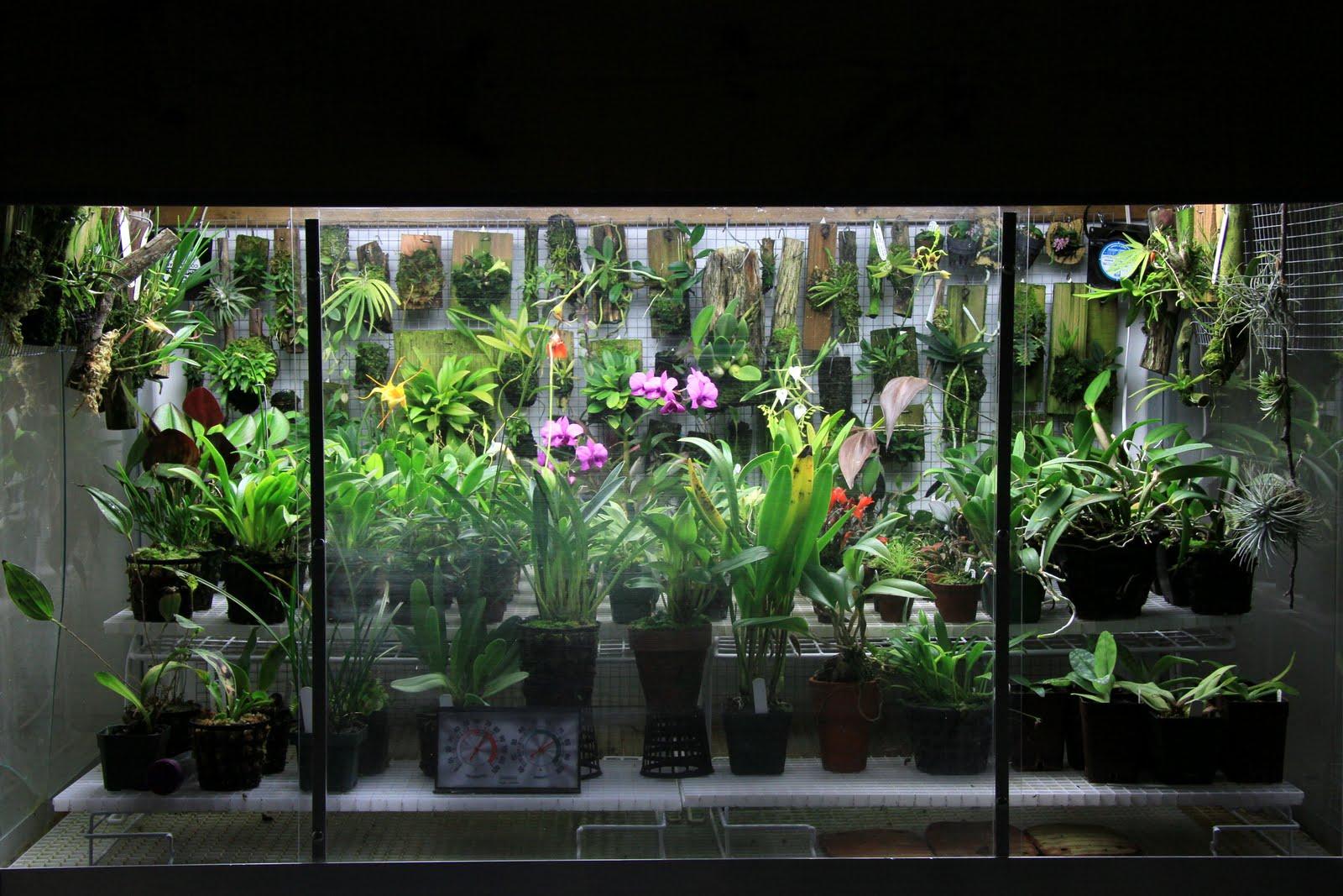 Orchids In Bloom Orchidarium Update