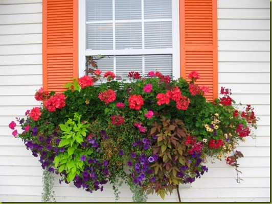 Front_window_box