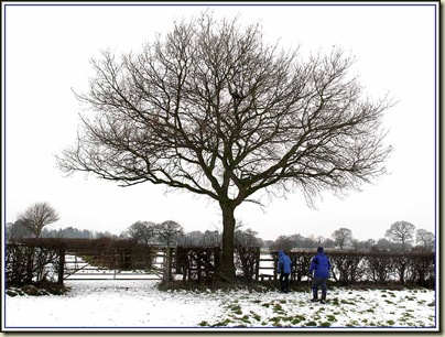 A winter scene in deepest Cheshire