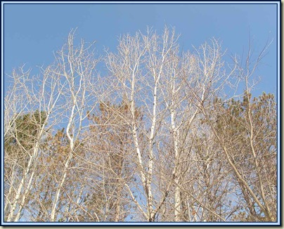Trees at P19