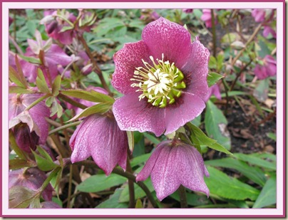 A pretty flower in Dunham Massey's winter garden on 23 March 2010