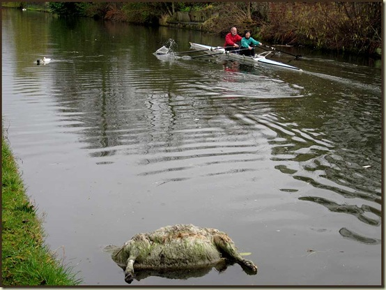 A scene on the Bridgewater Canal - 27/2/11