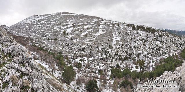 Cañada de las Fuentes - Tejos milenarios