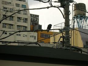 010 - Un cuervo.JPG
