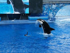 089 - Espectáculo de las orcas.JPG