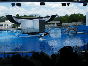 085 - Espectáculo de las orcas.JPG