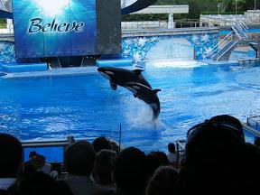 086 - Espectáculo de las orcas.JPG