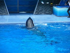 088 - Espectáculo de las orcas.JPG