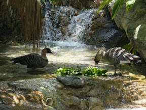 064 - Patos en Sea World.JPG