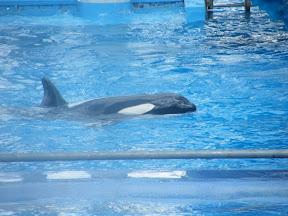 082 - Espectáculo de las orcas.JPG