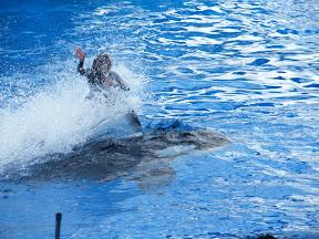 120 - Espectáculo de las orcas.JPG