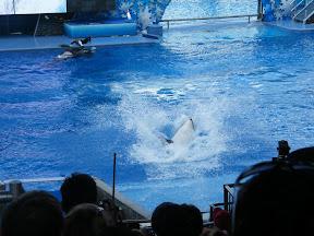 099 - Espectáculo de las orcas.JPG