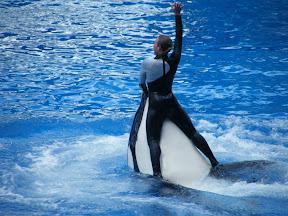106 - Espectáculo de las orcas.JPG