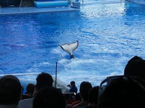 112 - Espectáculo de las orcas.JPG