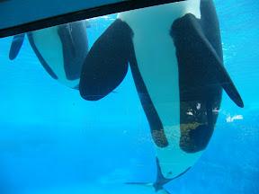 132 - Orcas.JPG