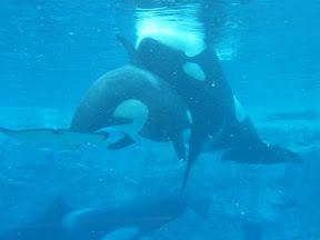152 - Orcas.JPG