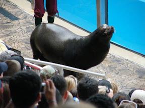 179 - Espectáculo de los leones marinos.JPG